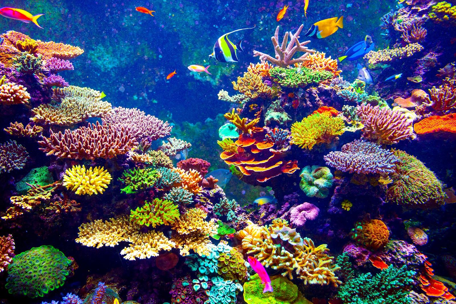 Krystal International Vacation Club Highlights Best Snorkel Spots in Puerto Vallarta