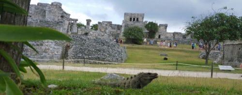 Krystal Cancun Paradise Timeshare Style (7)